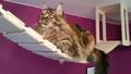 03-kočičí_výběhy-hřiště_pro_kočky.jpg