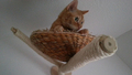 04-kočičí_výběhy-hřiště_pro_kočky.jpg