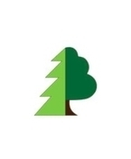 sibirske-drevo.JPG